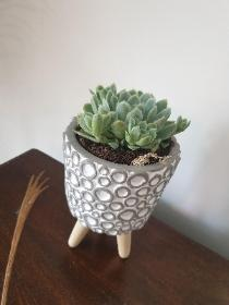 Succulent in footed pot!